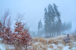 Foggy morning in winter Harz mountains Stock Image