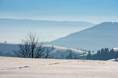 Foggy morning in winter mountains. Few naked trees on snowy hillside on foggy morning in winter mountains Royalty Free Stock Images