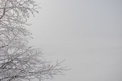 White frost on tree twigs stock image