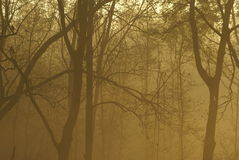 Foggy morning in the wood Royalty Free Stock Image