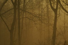 Foggy morning in the wood Stock Images