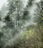 Foggy Mountain. Picture of a foggy mountain in the spring time Stock Images
