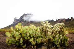 Mystical cactus and mountain landscape. Foggy mountain background with prickly pear cactus in foreground in Picacho Peak State Park, Arizona royalty free stock image