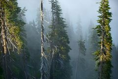 Foggy Mountain Forest Stock Photo