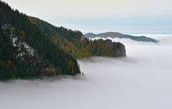 Foggy Mountain Forest stock photo