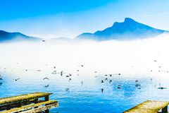 Foggy mountain landscape with seagulls on Pier of lake Mondsee i stock images
