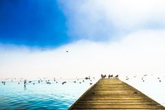 Foggy mountain landscape with seagulls on Pier of lake Mondsee i royalty free stock images