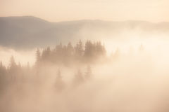 Foggy mountain morning Royalty Free Stock Image