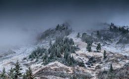Foggy Mountain With Pine Trees Stock Photos