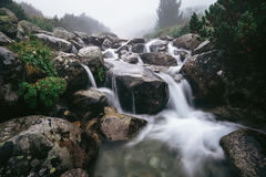 Foggy Mountain river clean stream in High Tatra, Slovakia Stock Images