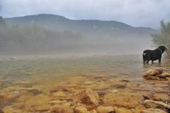 Foggy at Mountain River Kurdzhips and dog rottweiler royalty free stock images