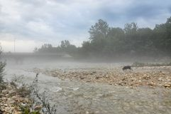 Foggy at Mountain River Kurdzhips Stock Photography