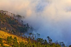 Foggy mountain slope Stock Photo