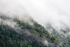 Foggy Mountain With Trees Stock Photo