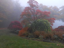 Foggy mysterious garden Stock Photos