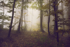 Foggy mystic forest. During fall Stock Images
