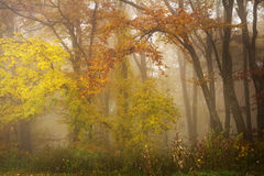 Foggy mystic forest. During fall Royalty Free Stock Photography
