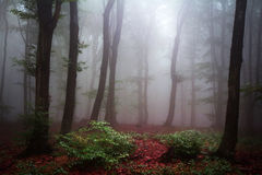 Foggy mystic forest during fall Stock Images