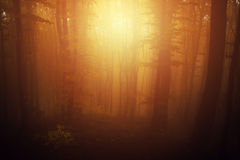Foggy mystic forest during fall Royalty Free Stock Photos