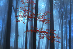 Foggy mystic forest during fall Royalty Free Stock Photography
