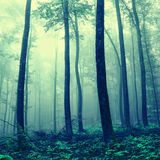 Foggy mystic light forest Stock Photo