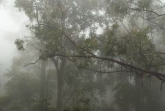 Foggy and mystical forest Stock Photos