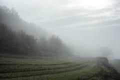 Foggy nature landscape 2 Royalty Free Stock Image