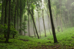 Foggy nature. Mystique nature while hiking with friends Stock Images