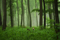 Foggy nature royalty free stock images