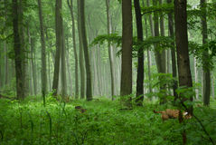Foggy nature. Mystique nature while hiking with my dog Stock Photo