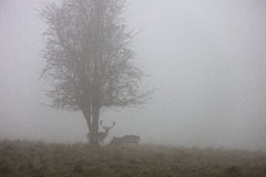 Foggy nature scene Royalty Free Stock Images