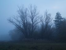 Foggy Night. Bare tree in fog during dusk Royalty Free Stock Photo