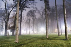 Foggy night in the park Royalty Free Stock Photography