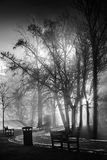Foggy night in park Stock Image