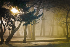 Foggy night in park Royalty Free Stock Photography