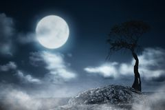 Foggy night with tree and moonlight royalty free stock image