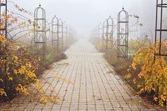 Foggy November day in a park royalty free stock photos