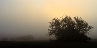 Foggy november landscape. Picture of a foggy dark silhouette november landscape in Germany Royalty Free Stock Photo
