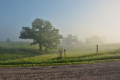 Foggy Oak Tree. A row of fog covered oak trees and fenceposts Stock Images