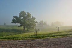 Foggy Oak Tree stock images