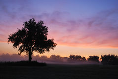 Foggy Oklahoma Sunrise Stock Photos