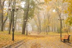 Foggy park Royalty Free Stock Photos