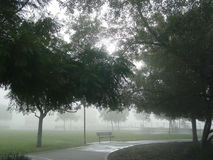 Foggy park. Trees along footpath in foggy park Royalty Free Stock Image