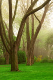 Foggy park Stock Photo