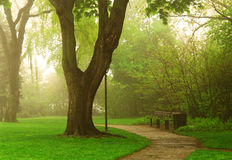 Foggy park Royalty Free Stock Photo