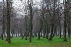 Foggy park Stock Photography