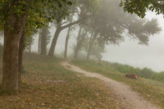Foggy park near lake Stock Photo