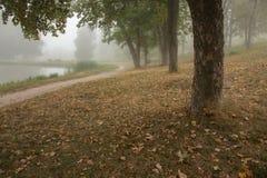Foggy park near lake Stock Images