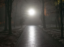 Foggy park at night Stock Photography