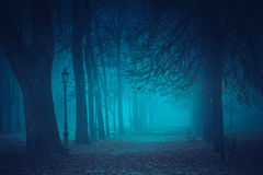 Foggy park in the night Stock Photography